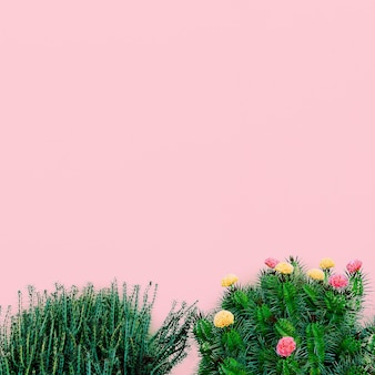 Plants on pink minimal fashion concept. cactus tree on pink wall background