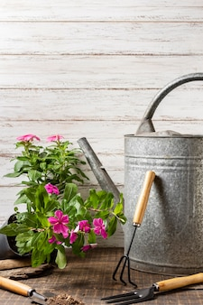 Plants pot with watering can