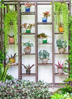 Plants in pots decorate steel shelf