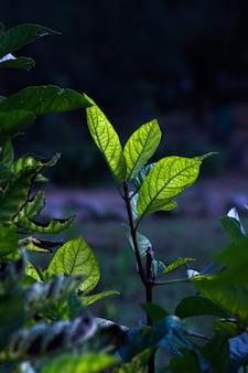 暗い背景に日中の自然光を反射する植物