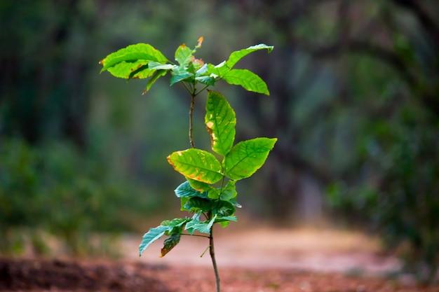 暗い背景に日中の自然光を反射する植物 Premium写真