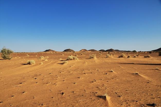 Plants in sahara desert of sudan