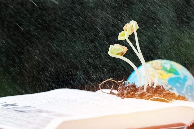 Plants seeding growing water spraying on book