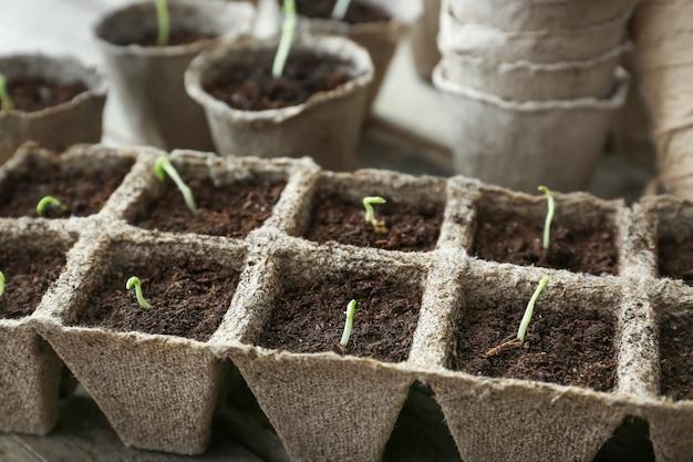 Plants seedlings in peat pots kit on table