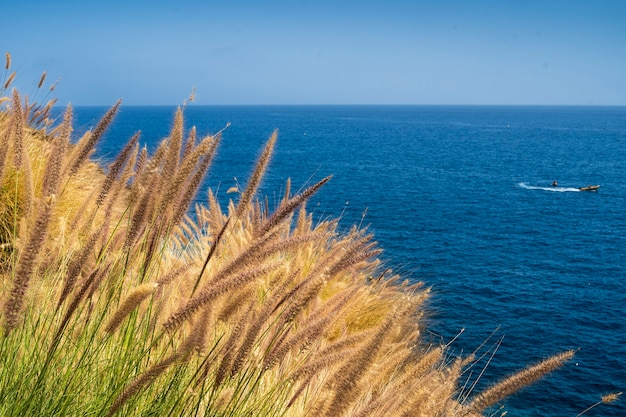 Plants on the south coast of gran canarias