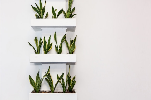 Plants in square pots on a light wall on the shelves. decorations for office and home, interesting design solutions