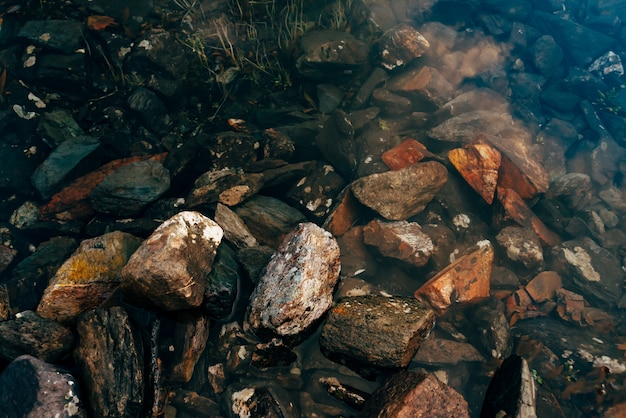 Plants and stones on bottom of mountain lake with clean water