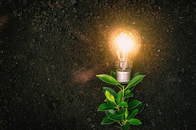Растения с лампочками - это энергосберегающие концепции.