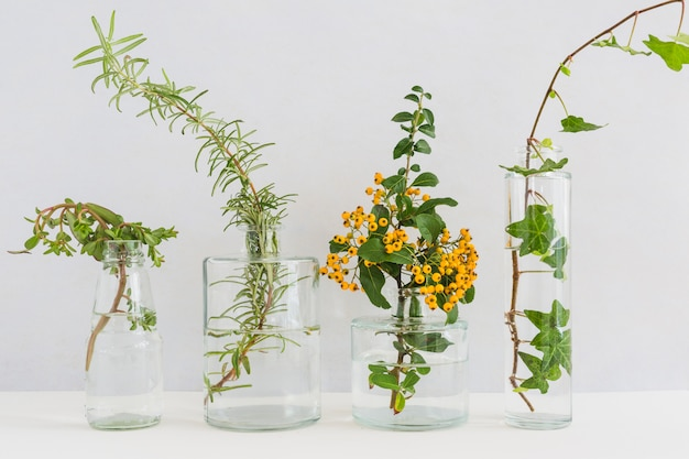 Plants in transparent vase on desk against white backdrop