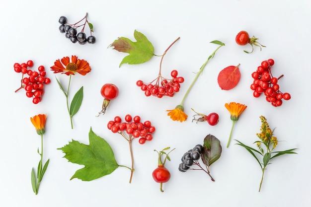 Растения калина, рябина, ягоды, шиповник, цветы, красочные листья, изолированные на белом фоне