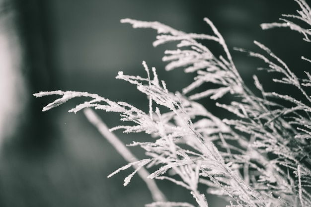 Plants in winter covered with frost and snow