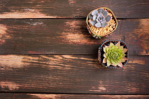 Plants on wood table with copy space
