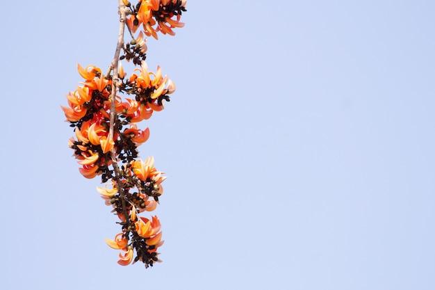 Plash flower on clear background.