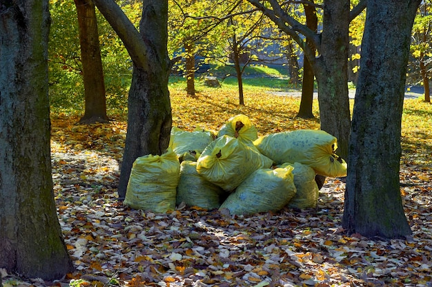 Plastic bags with dry leaves are stacked in the autumn park. seasonal cleaning of fallen leaves