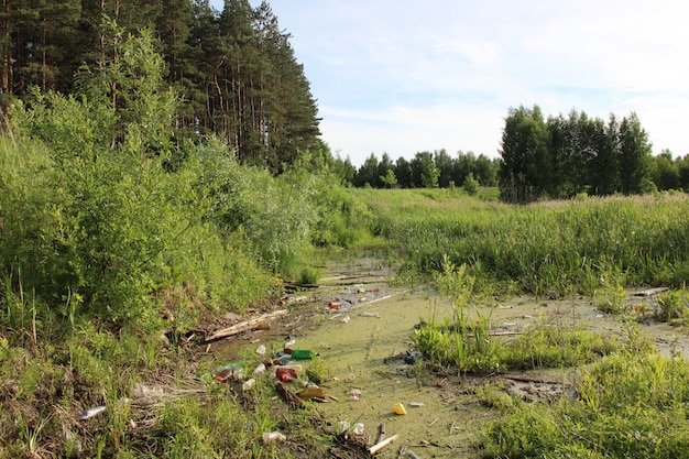 Plastic bottles thrown into the swamp.