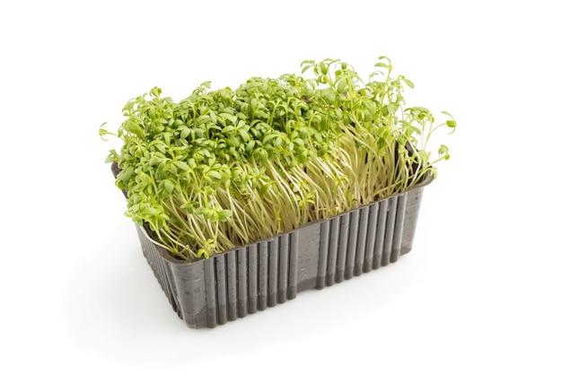 Пластиковая коробка с ростками микрозелени кресс-салата, изолированными на белой поверхности