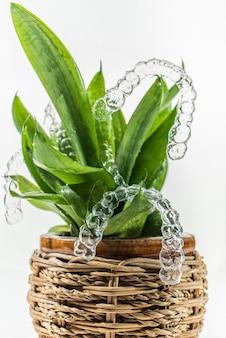 실내 식물의 녹색 잎에 매달려 있는 치아 교정용 플라스틱 교정기 치과 리테이너