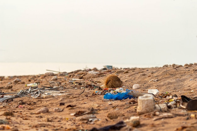 Plastic debris waste litter on ground pollutes sand beach sea
