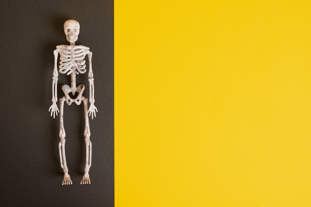 黒と黄色のプラスチック装飾スケルトン