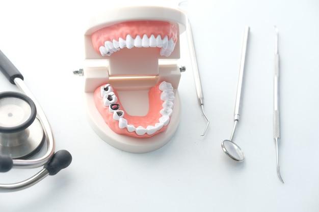 Plastic dental teeth model on white surface