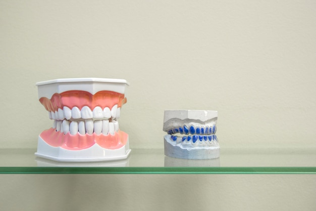 Plastic human teeth models and dental model of teeth on glass shelf