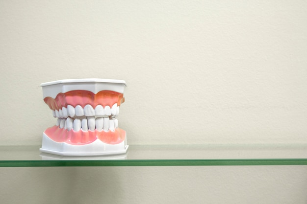 Plastic human teeth models on glass shelf, light colors