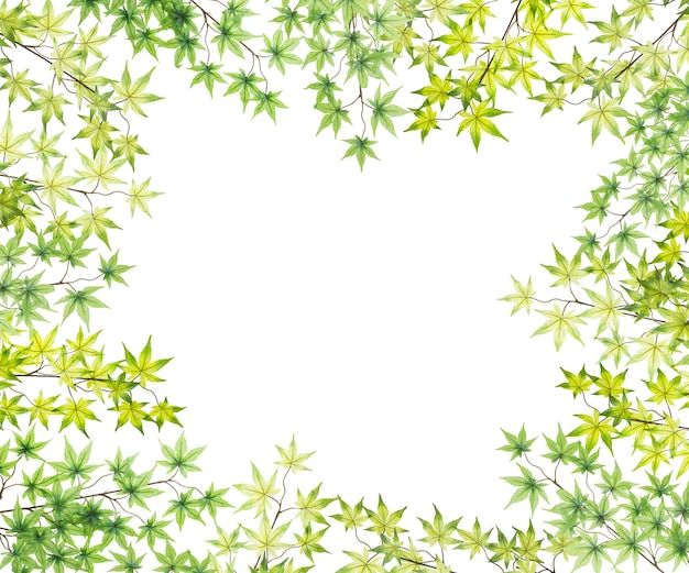Пластиковая рамка из кленовых листьев, изолированные на белом фоне