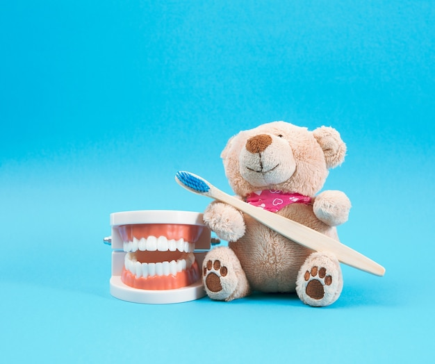 Plastic model of a human jaw with white teeth and a brown teddy bear with a wooden toothbrush on a blue background, children's dentistry and hygiene