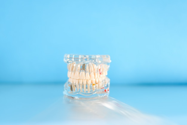Plastic model of a jaw with complete teeth for study, isolated on background with copy space.