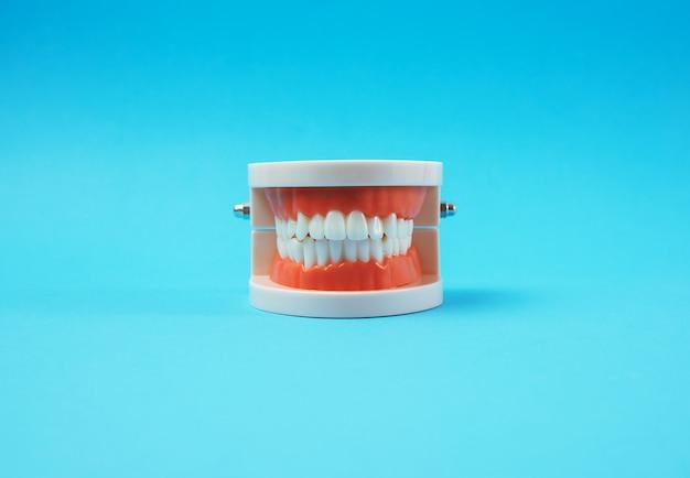 파란색 배경에 하얀 치아와 인간의 턱의 플라스틱 모델을 닫습니다