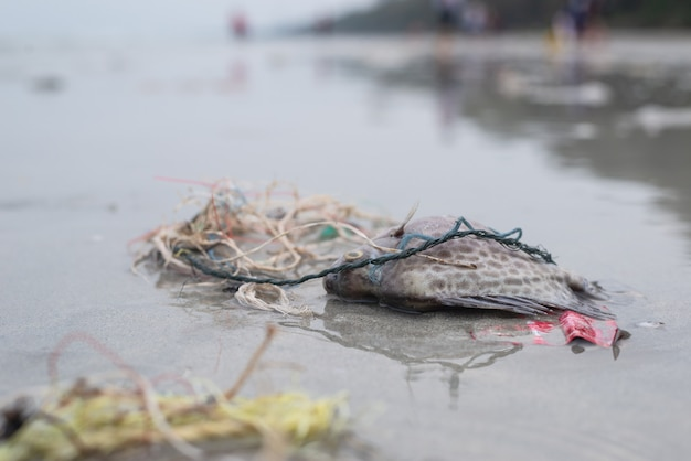 Plastic pollution problem, death fish on the beach with dirty plastic garbage