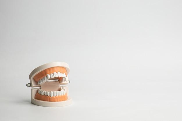 Пластиковые зубы модели с зубной щеткой, как правильно и правильно чистить зубы, на белом фоне