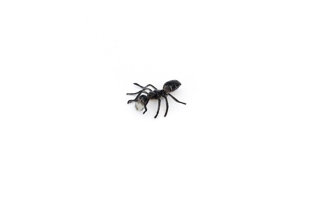 Plastic toy insect - black ant, isolated, close up.