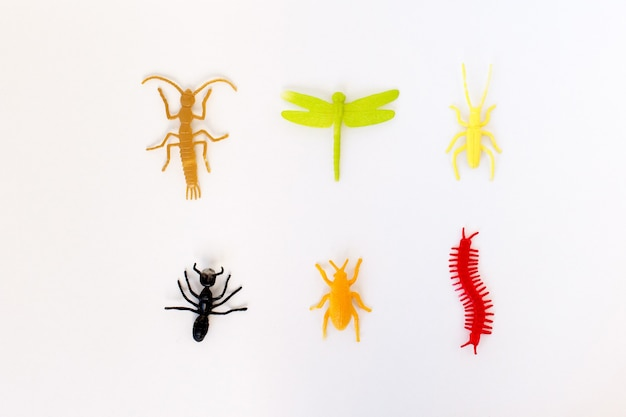 Plastic toy insect ( orange beetle tick, green caterpillar, red centipede or millipede, black ant )  isolated, close up.