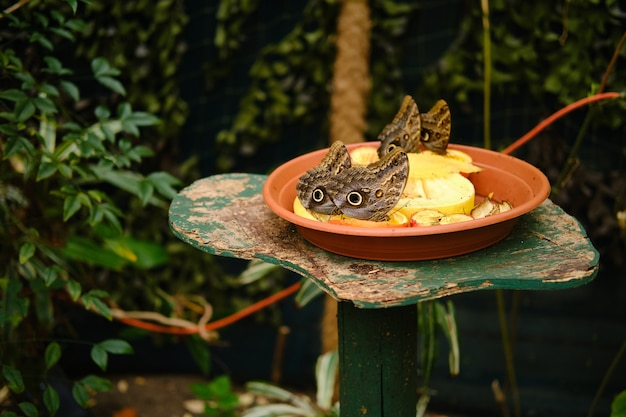 Тарелка, полная фруктов с бабочками-совами на них, в окружении зелени под солнечным светом