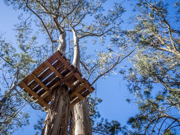 木のプラットフォーム