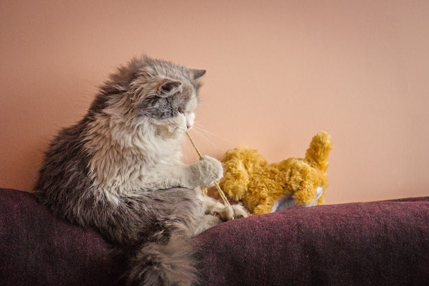 Playful cat kitten with toy