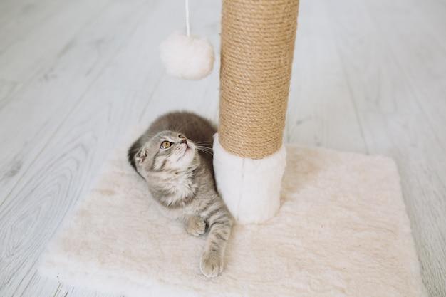 遊び心のある猫のボールを見て
