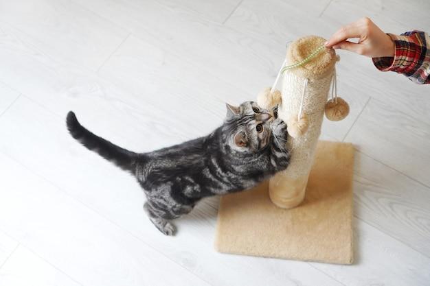 女性の手で遊ぶ遊び心のある猫