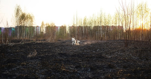 Игривая собака бегает по полю с зданиями и небом на фоне солнечным весенним утром