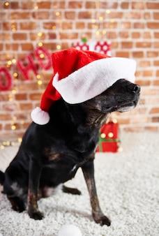 Playful dog wearing a santa hat