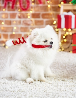 Playful dog with santa hat