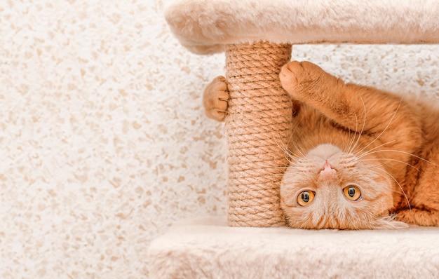 애완 동물 집에서 굴러다니는 장난기 많은 생강 고양이