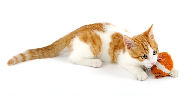 Игривый котенок изолирован