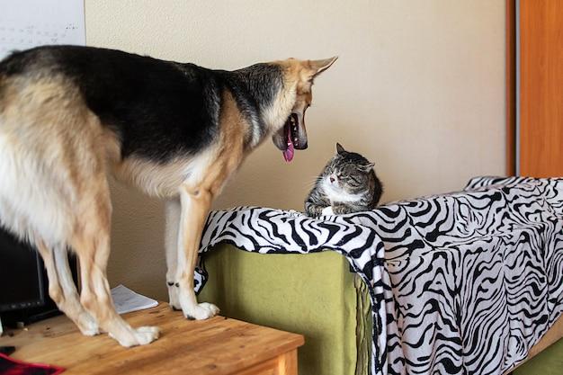 장난꾸러기 잡종 개와 집에서 짜증나는 고양이