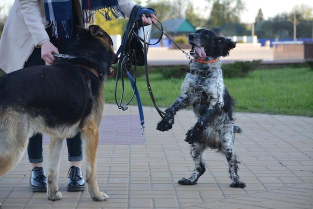 Играющие собаки в городе