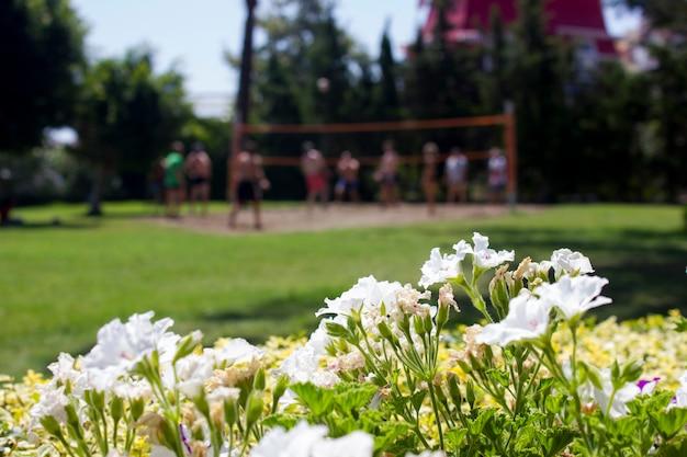 Играя в волейбол на траве. размытый фон