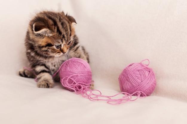 Игра с шерстью. милый маленький шотландский вислоухий котенок играет со спутанной шерстью