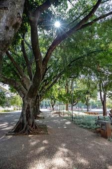 Plaza dr. pedro ludovico teixeira in goiania city