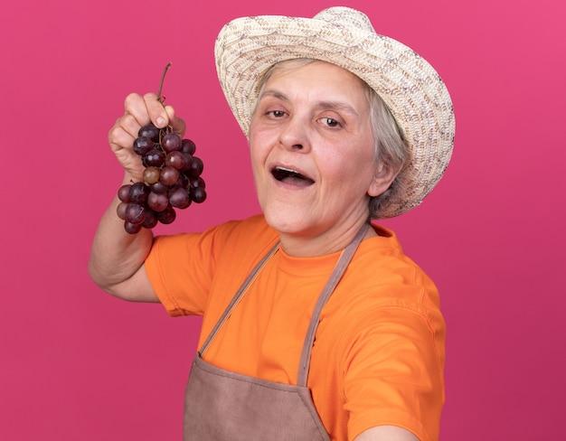 Довольная пожилая женщина-садовник в садовой шляпе держит гроздь винограда и смотрит в камеру, делая селфи на розовом